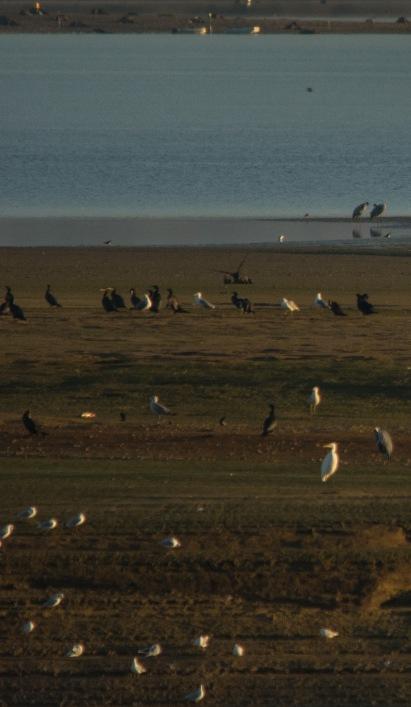 Rastplätze der Zugvögel
